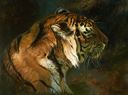 julie_bell_jb1032_tiger_shadow_small.jpg