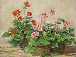 sally_swatland_s1147_geraniums_small.jpg