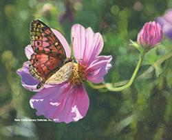 terese_rogers_bg1029_butterfly_wm_small.jpg